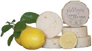 Lemon Tea Tree
